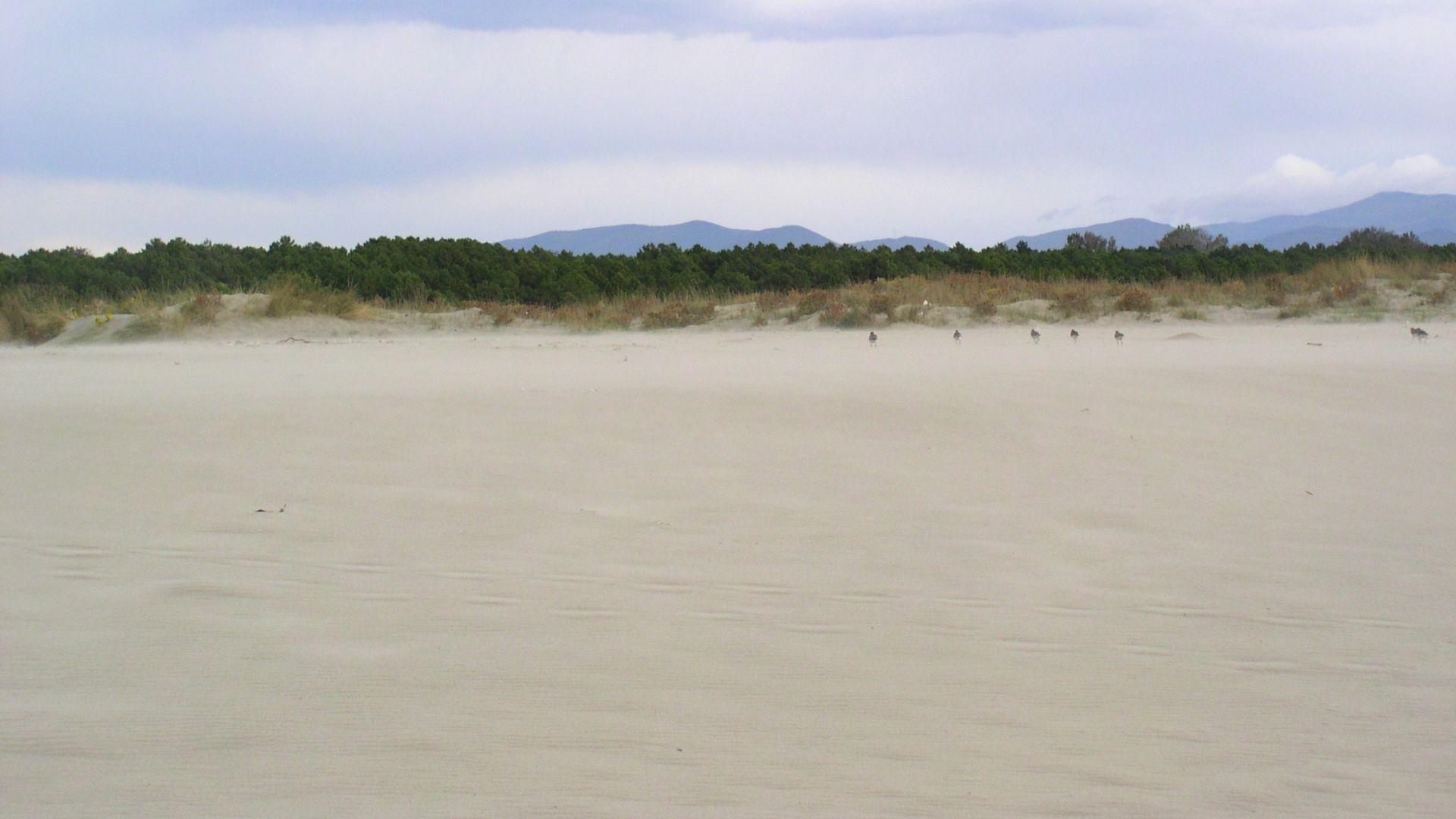dune della versilia